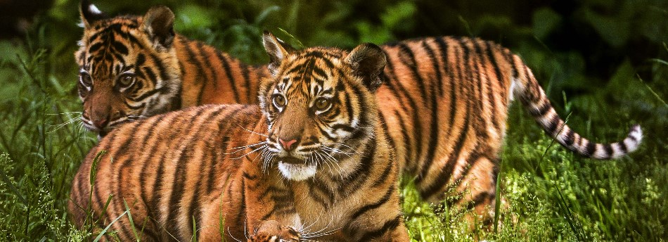chester zoo - photo #9
